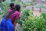 Two young women looking at vegetables growing in a garden.